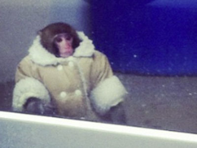 lost Ikea monkey