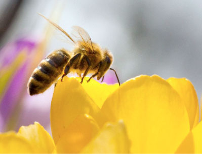 the bee venom as hiv cancer cure information nigeria