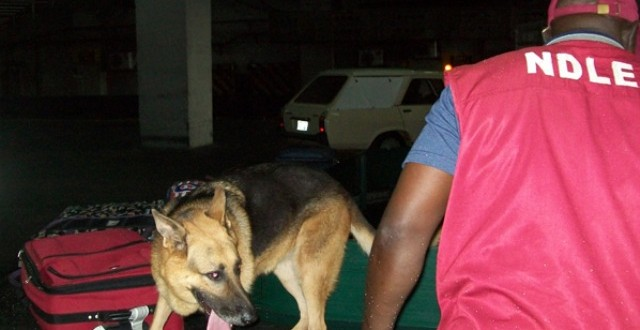 NDLEA Seizes 4,832.74Kg Of Narcotics In Abuja
