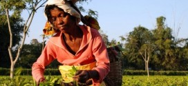 India Tea Workers Kill Owner in West Bengal Over Pay Dispute