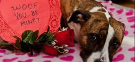 Survey: Valentine's Revelers To Spend $703 Million On Gifts For Pets