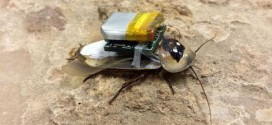 Remote-controlled Search-and-rescue Cockroaches Are Coming, Researchers