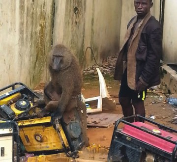 Man Arrested For Using Baboons, Snakes For Robbery