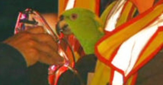 Firefighters Discovers Calls For Rescue Were Made By Parrots Not Humans