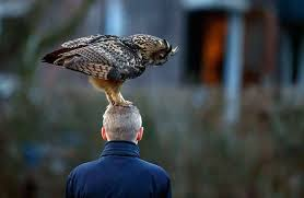 This Famous Dutch Owl Loves To Land On People's Heads
