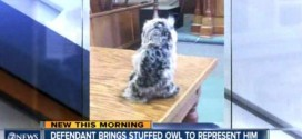 Colorado Man Brings Stuffed Owl To Court As Defense Counsel