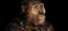 'New Species' Of Ancient Human Found