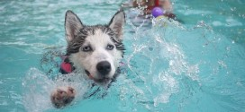 Dog Drives Pickup Truck And Its Owners Into Swimming Pool