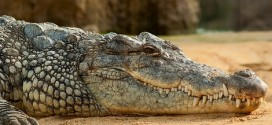 7-Year-Old Boy Eaten Alive By Crocodile After Running Into River To Catch A Balloon