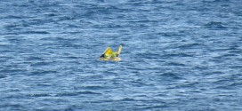 10-Month-Old Baby Rescued From Sea One Mile Off The Coast