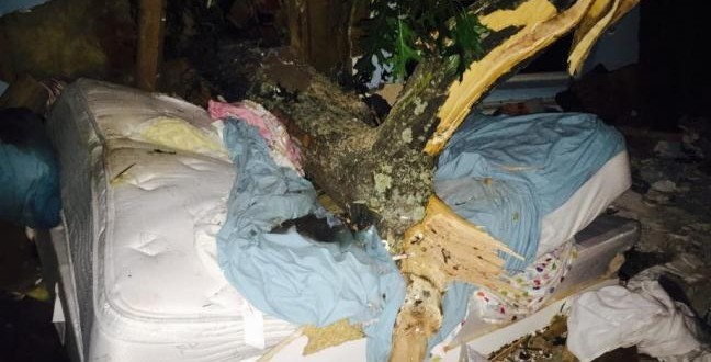 Woman Pinned To Her Bed By Fallen 5,000-pound Tree Rescued After 2hrs