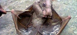 Mysterious Bat With Horse-like Face Found In Fish Pond [PHOTOS]
