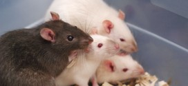 10-Day-Old Baby Mauled To Death By Group Of Rats In Hospital