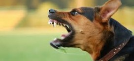 55-Years-Old Woman Biten To Death By Dog In Ondo