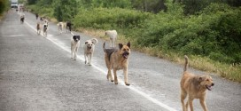 Govt To Prosecute Owners Of Stray Animals In Lagos