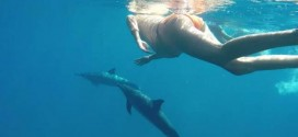 Pregnant Hawaii Woman Announces Plan To Use Dolphin As Midwife