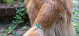 Read About The Tail-Mounted Sensor That Can Tell You What Your Dog Is Feeling
