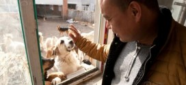 Chinese Millionaire Left Penniless After Spending All His Fortune On Rescuing Dogs