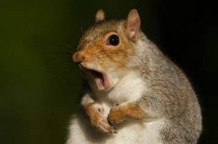Squirrel-left-thousands-without-power-in-Tulsa