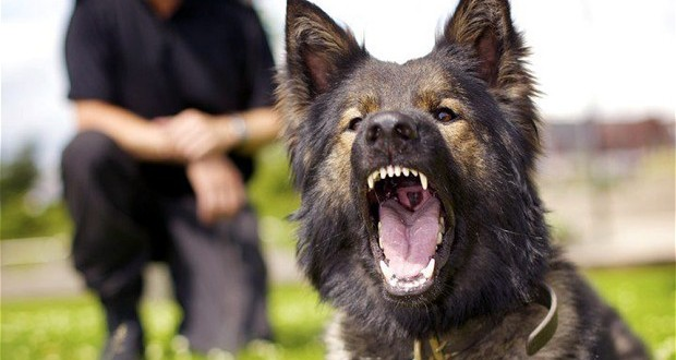 police dog turns on its handler information nigeria