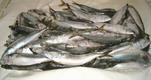 Fg destroys 15 containers of spoilt frozen fish in lagos for Frozen fish food