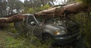 california-mans-two-vehicles-crushed-by-different-trees-in-different-cities-on-same-day