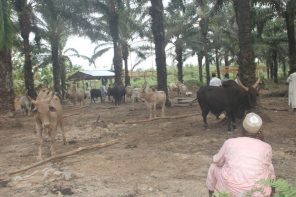 Catholic Church Confirms Killing of Two Priests by Herdsmen in Benue