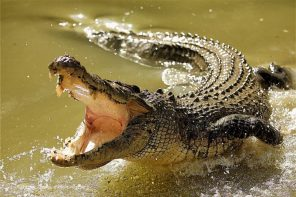 Angry villagers kill almost 300 crocodiles in revenge killings