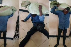 Man turns himself in to police aftera bag he stole, got stuck on his head