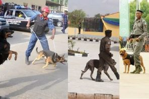 2019 Polls: Police, Civil Defence demand N317m to feed Dogs & Horses ahead of the Elections