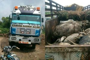 Dead cows allegedly smuggled into Rivers state (Photos)