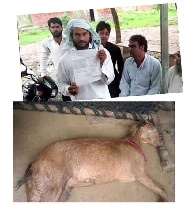 A Pregnant Goat Died After Being Gang-Raped By Eight Men