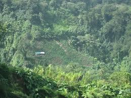 Pastor Owned Marijuana Farm Found In Akwa-Ibom