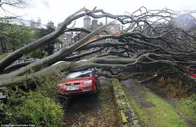Tree Striked By Thunder Falls And Kills Niger CPC Legal Adviser Inside His Car