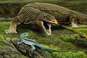 Obamadon gracilis