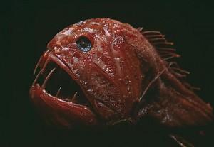 fish_weird_1