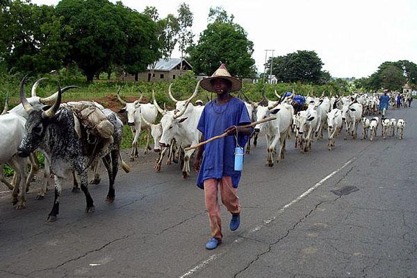 fulani-herdsmen