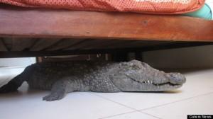 Alarm Croc