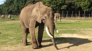 elephantafrica