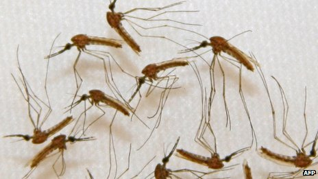 malaria_vaccine_1