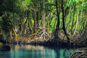 Dominican_republic_Los_Haitises_mangroves