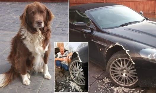 dog-chews-car