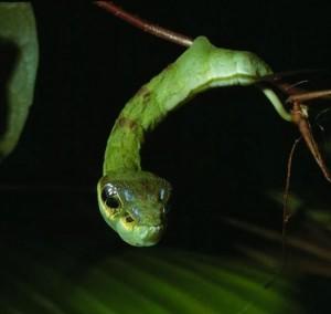 snake-caterpillar-550x521
