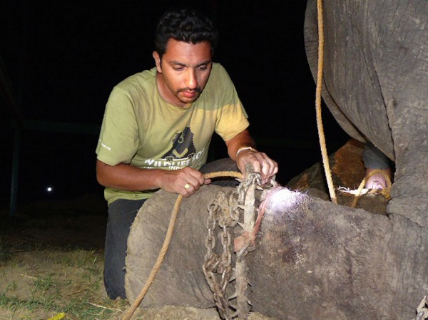 crying-elephant-raju-rescued-chained-50-years_04
