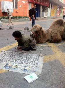 camel-begging2-550x736