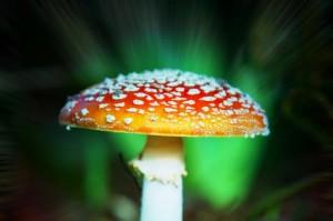 Magic-mushrooms-found-in-Queen-Elizabeths-garden