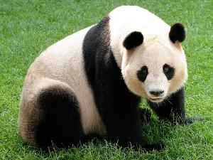 g-panda_img01-l