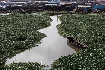 WATER HYACINTH COVERED LAGOON, NEAR THE MAKOKO SLUM, LAGOS. THE LASG PLANS TO CONVERT THE WATER PLANT TO FERTILISER FOR FARMERS (CREDIT: DAILY MAIL UK)