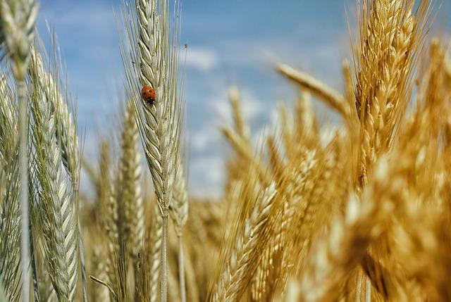 Study-finds-whole-grains-help-extend-life