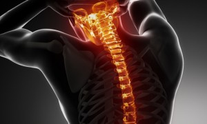 spinal-cord 2